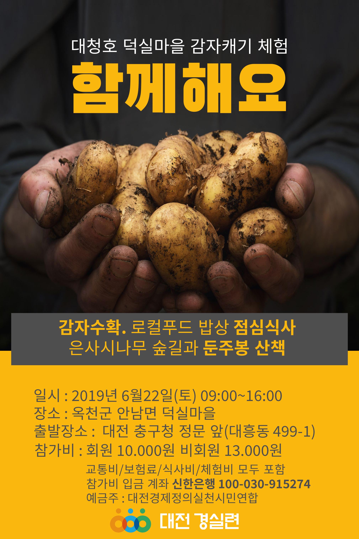 감자수확체험1